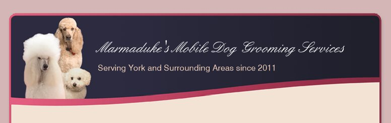 Mobile dog groomer covering York  - Company Message